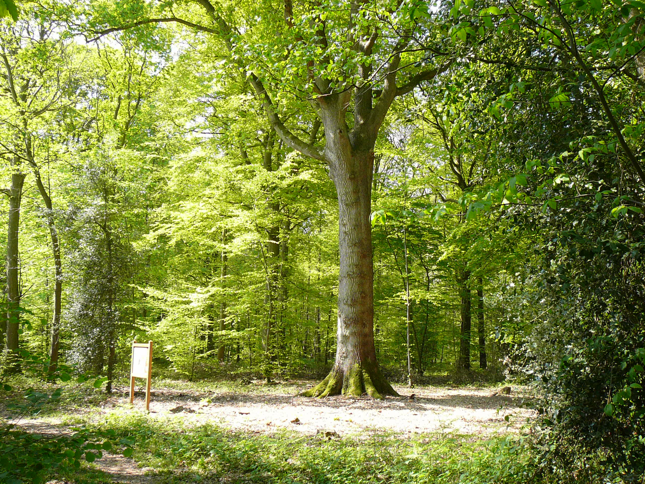 la forêt domaniale de montfort sur risle en normandie