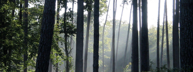 La forêt domaniale de Montfort Ancienne forêt seigneuriale des comtes et barons de Montfort, la forêt domaniale de Montfort fut rattachée aux domaines 1