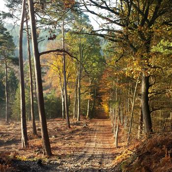 La forêt domaniale de Montfort